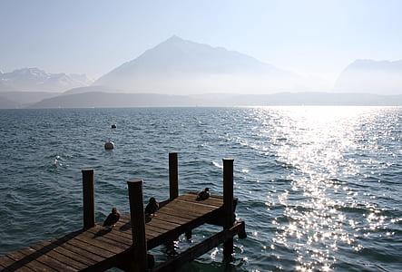 three ducks on brown wooden dock