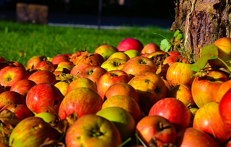 ripe apple lot