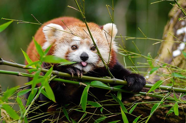 panda leaning on green bamboo tree