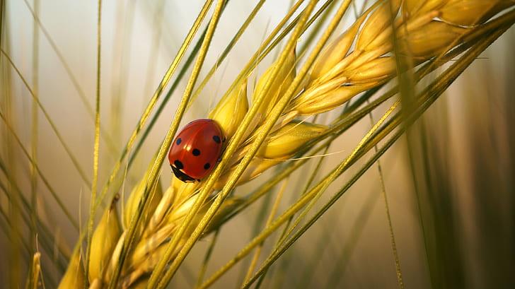 ladybug on rice plant