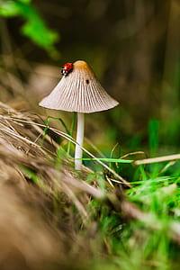 red ladybug on mushroom