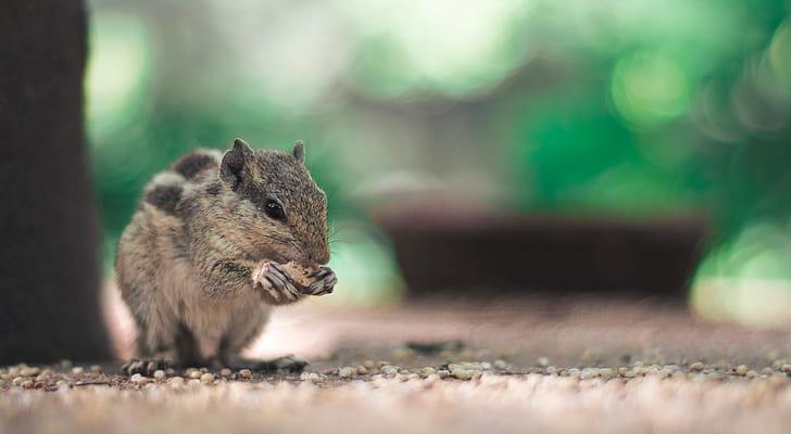 focus photo of a squirrel