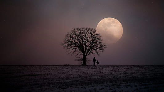 father and child standing beside baretree looking moon