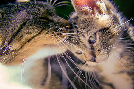 shallow photography of two gray Tabby kittens during daytime