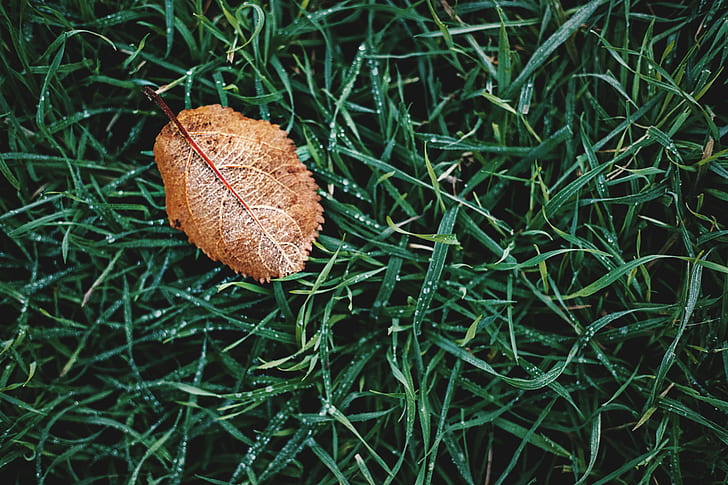 High Angle Photography of Brown Leaf on Grass