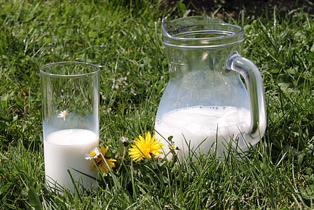 clear glass pitcher and drinking glass on grass field