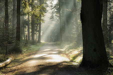 road in the middle of the forest during daytime