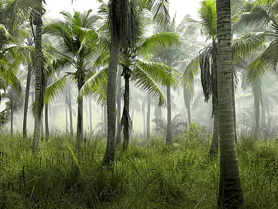 landscape photography of coconut trees