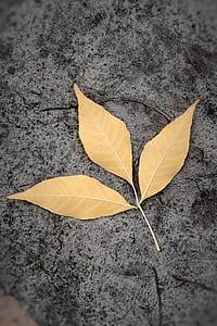 three leaves on surface
