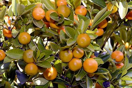 orange fruits closeup photo
