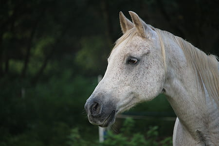 gray horse during daytime