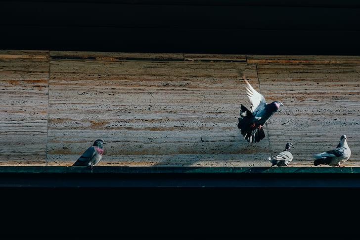 white and gray pigeons on the side of the road