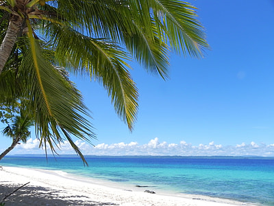 beach with coconut tree at daytime