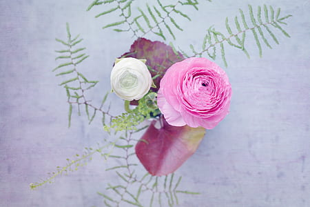 pink and white petaled flowers macro photography