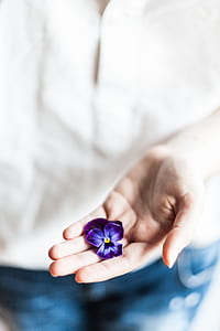 person wearing white shirt holding purple pansy flower