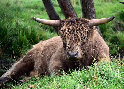brown buffalo lying on grass