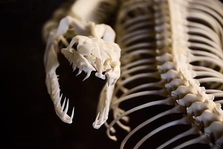photo of snake skeleton