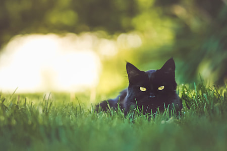Black cat sitting in the garden grass