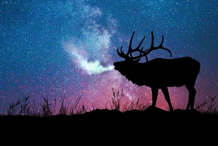 Silhouette of deer wallpaper