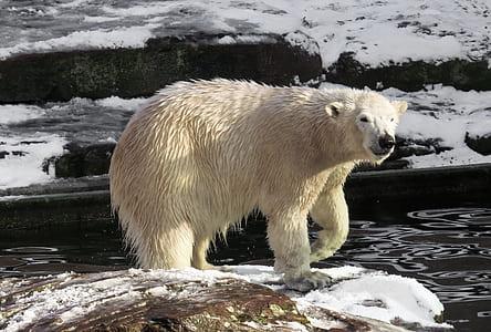 white Polar bear on brown rock during daytime