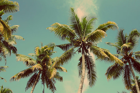 low-angle photography of palm trees under blue sky and white clouds
