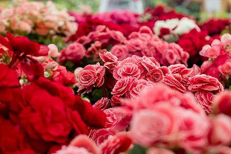 Assorted Varieties of Flowers