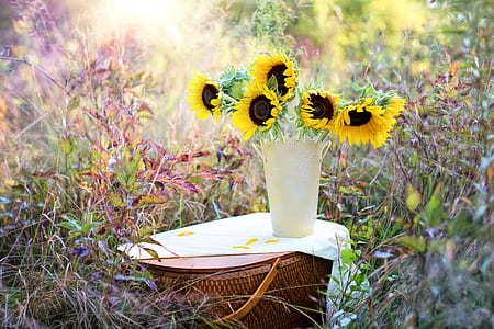 Sunflower on white ceramic flower vase