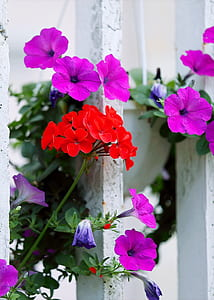 Red And Purple Petaled Flowers