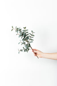 person holding green leafy plant