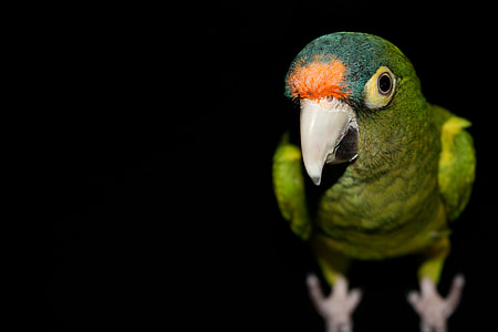 close up photography of green bird