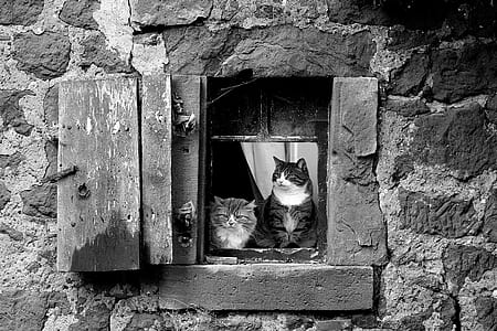 two cats on window grayscale photos