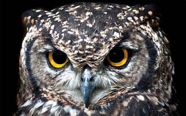 closeup photo of gray owl