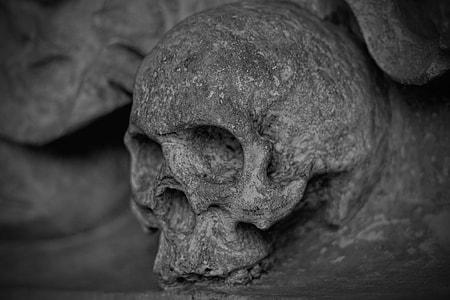 gray skull embossed decor