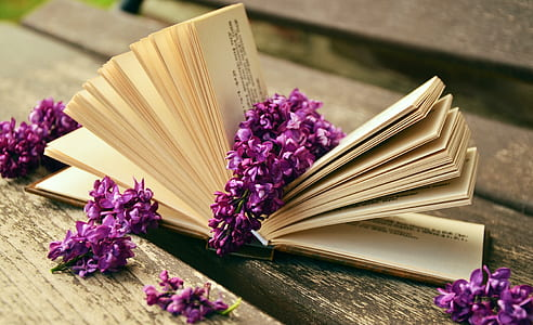 photo of purple petaled flowers on opened book page