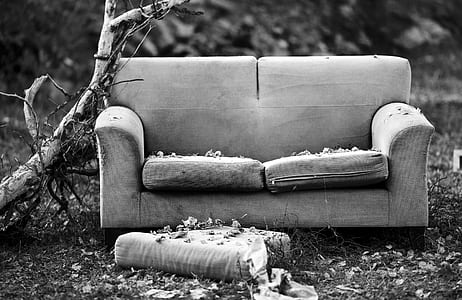 grayscale photography of fabric loveseat near tree branch