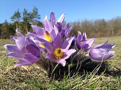 Purple Multi Petal Flower on Grass