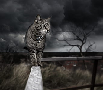 gray tabby cat on handrails