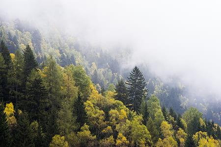 field of green trees below fogs