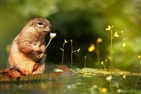 squirrel near water photo