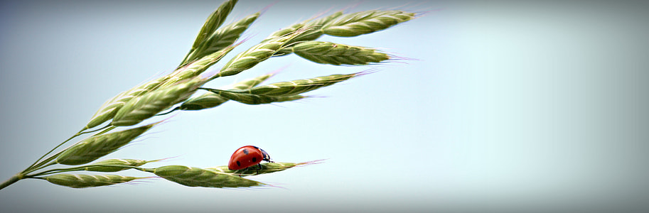 lady bug on top of grass during daytime