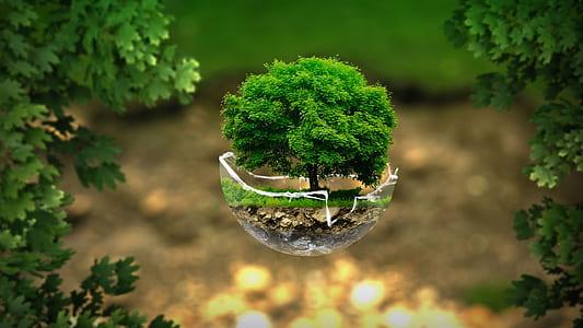 green leaf pet tree