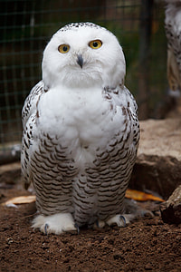 closed up photo of black and white owl