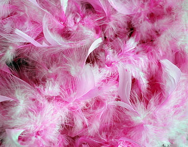 pink and white feathers