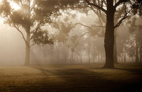 foggy forest photograph