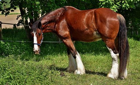 closeup photo of brown horse near tree