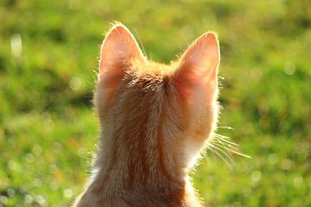 close-up photography of orange kitten