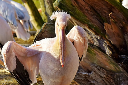 closeup photo of white toucan
