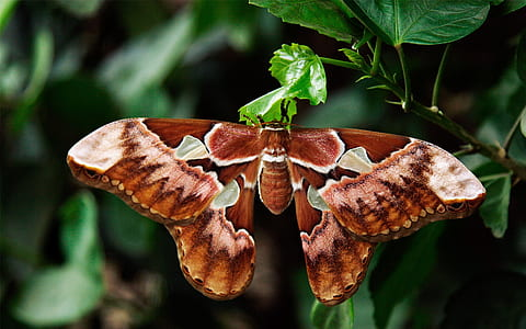 close-up photography of brown and green butterfly perching on green leaf plant during daytime