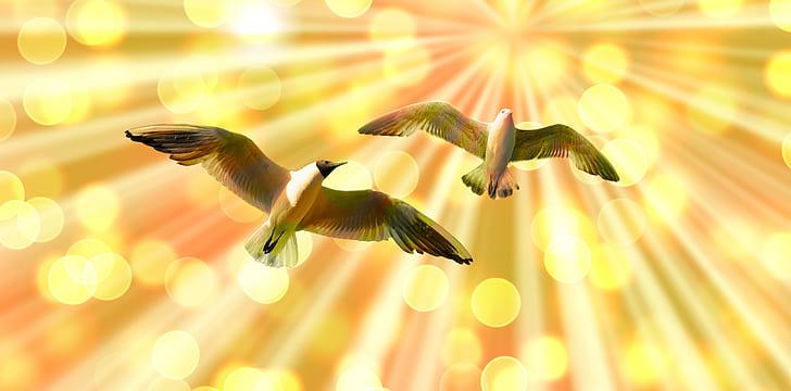 two gray birds of flight