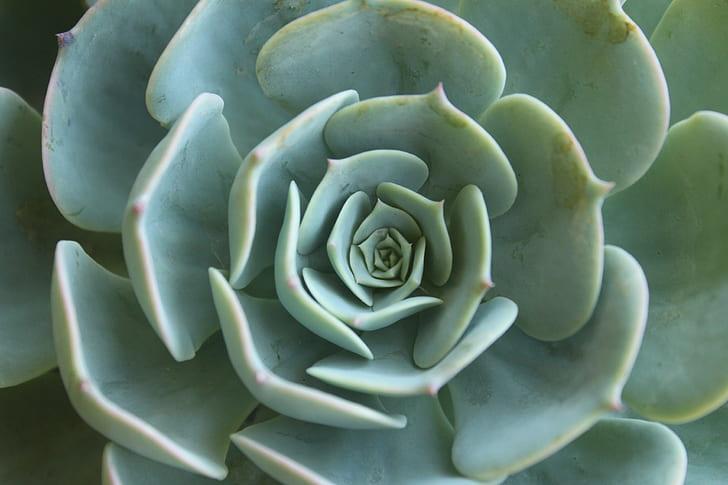 closeup photo of green succulent plant